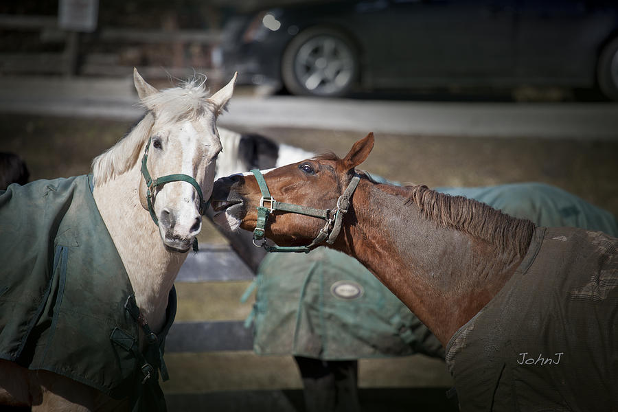 Horses Photograph - Whisper by John Jeevaratnam