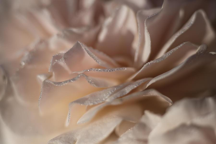 Morning Photograph - Whisper Sweet Nothings by Edward Kreis