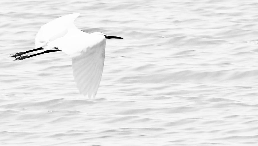 Bird Photograph - Whispering White by Elizabeth Hart