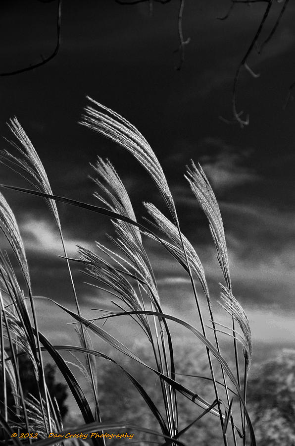 Landscape Photograph - Whispering Wind by Dan Crosby