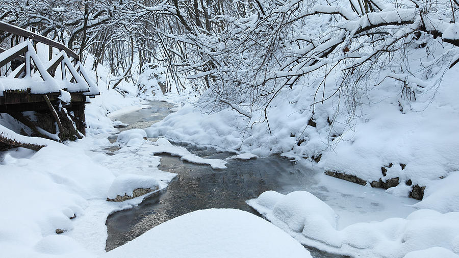 Winter Photograph - Whist Of December by Ferenc Farago - Photograph Art
