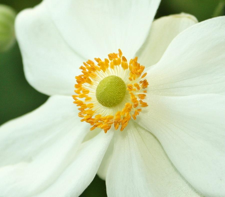Summer Flowers Photograph - White And Yellow by Cathie Tyler