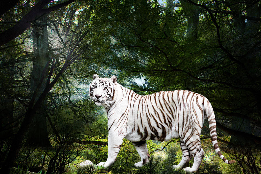 Bengal Photograph - White Bengal by Elizabeth Hart