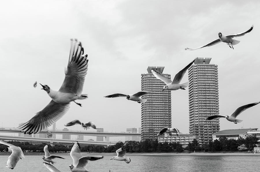 Horizontal Photograph - White Birds In Flight by BZause a picture is worth a thousand words.