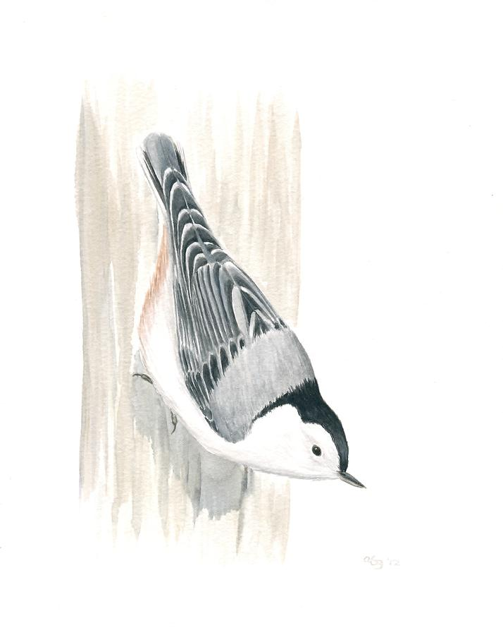 Bird Painting - White-breasted Nuthatch by Anna Bronwyn Foley