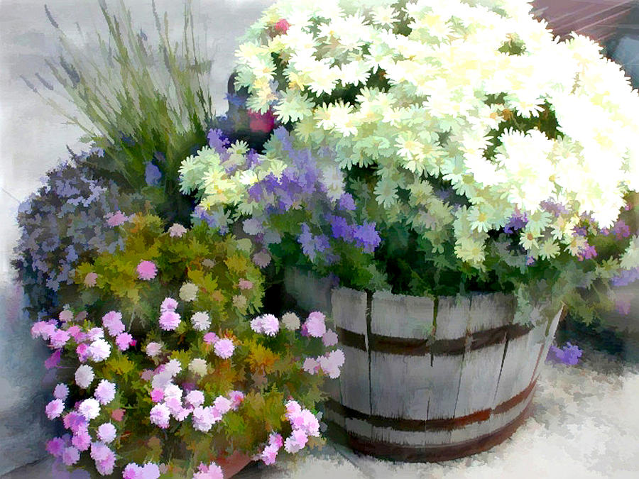Mums Painting - White Chrysanthemums In A Barrel by Elaine Plesser