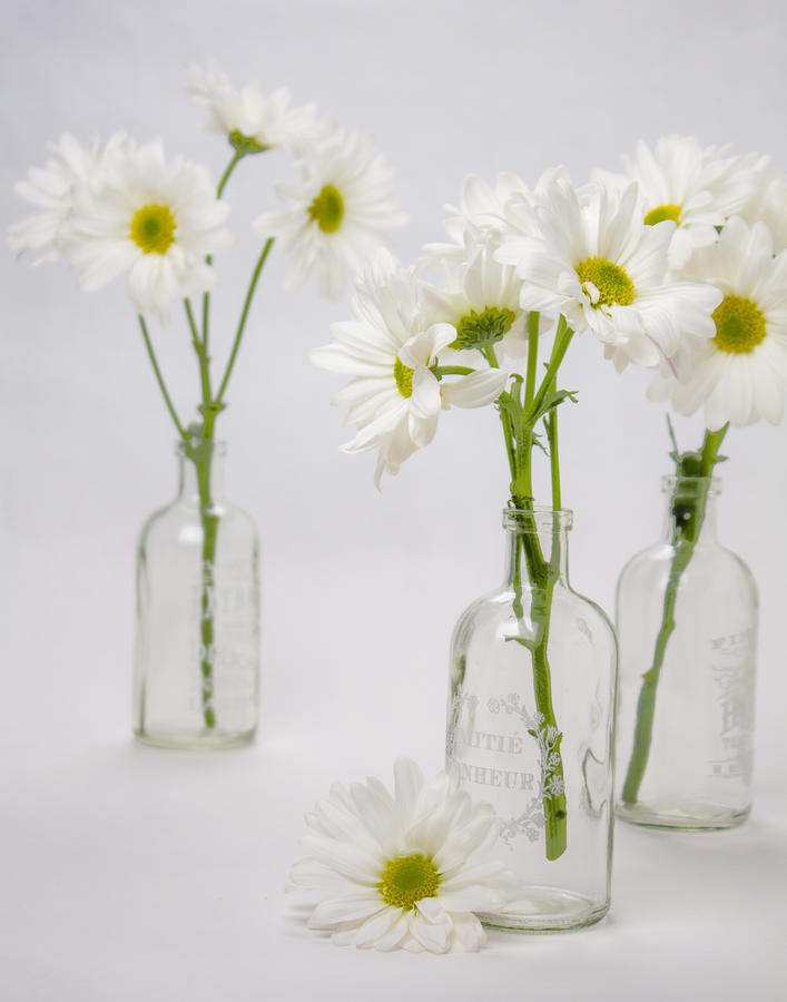 White Daisies In Clear Glass Bottles Photograph By Vj Lair