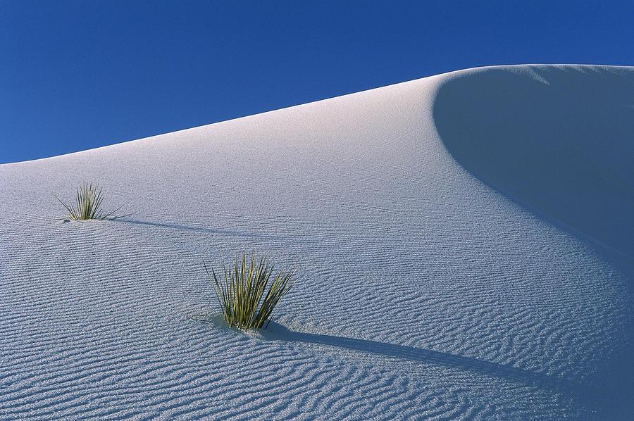 White Dunes In Gypsum Dune Field, White Photograph by Konrad Wothe
