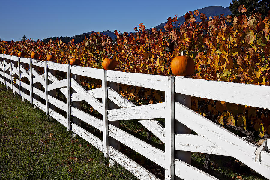 Fence Photograph - White Fence With Pumpkins by Garry Gay