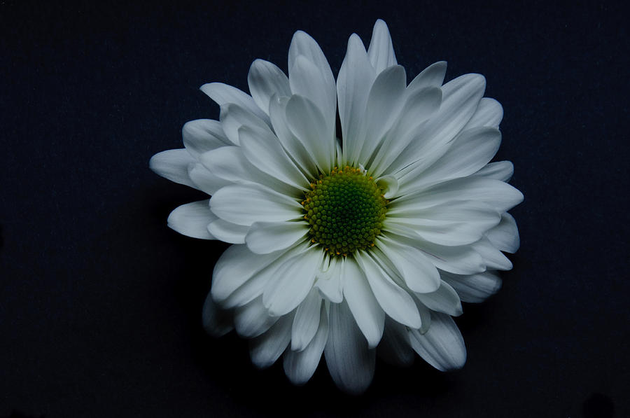 White Flower 1 Photograph by Ron Smith