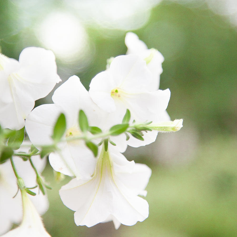 White Summer Flowers Pink Red And White Summer Flowers Gretting