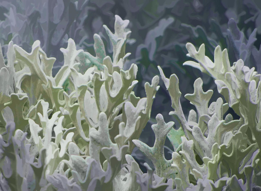 Flowers Photograph - White Forest 7 by Michael Taggart II