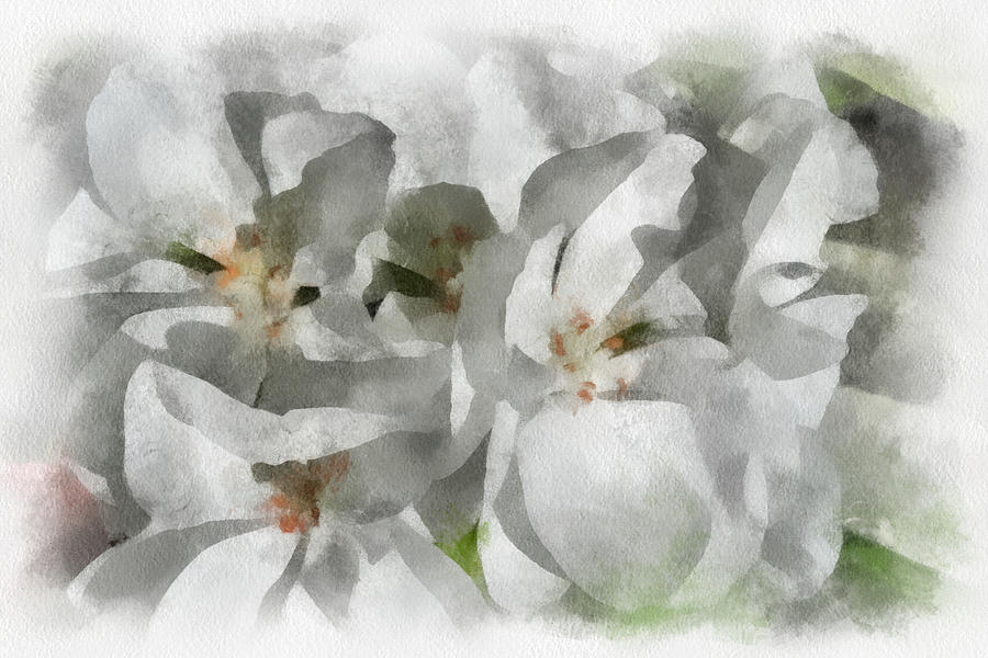 Santa Digital Art - White Geraniums - Watercolor by Charles Muhle