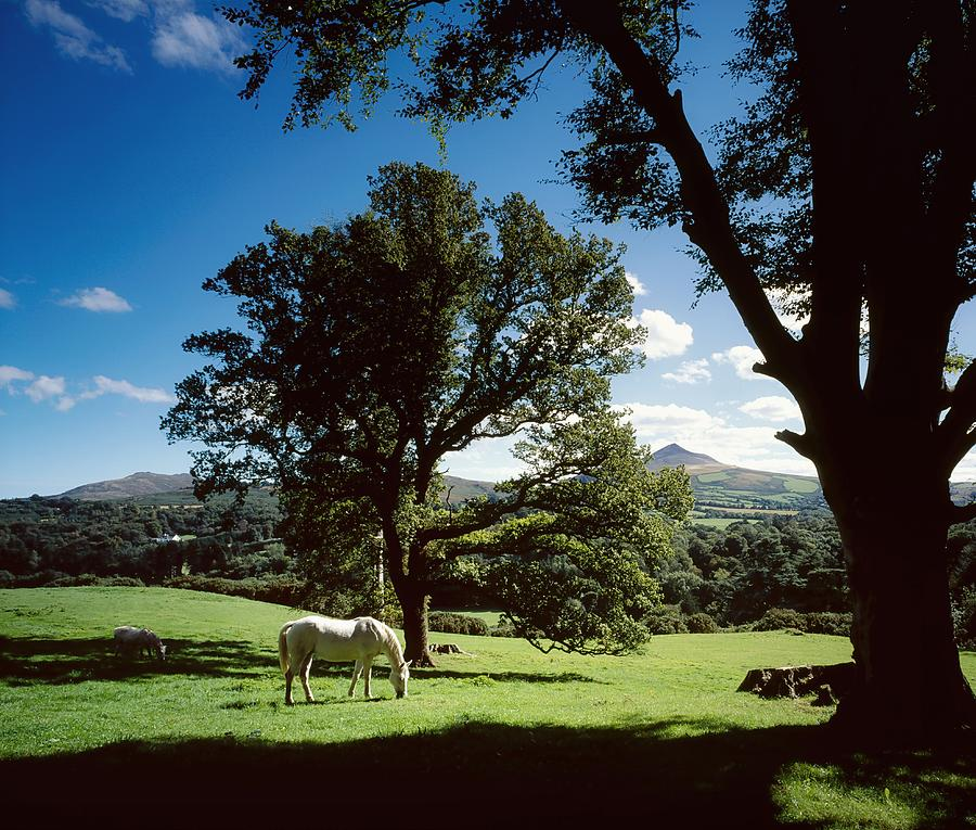 Enniskerry Photograph - White Horse At Powerscourt, Co Wicklow by The Irish Image Collection