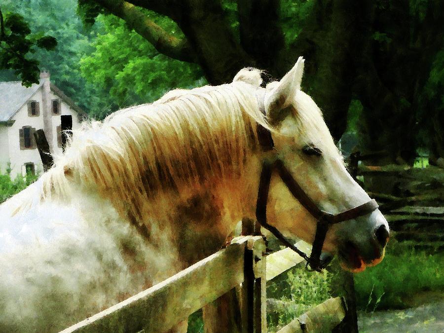 Horse Photograph - White Horse Closeup by Susan Savad