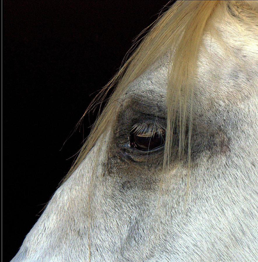 Vertical Photograph - White Horse by Marmimuralla