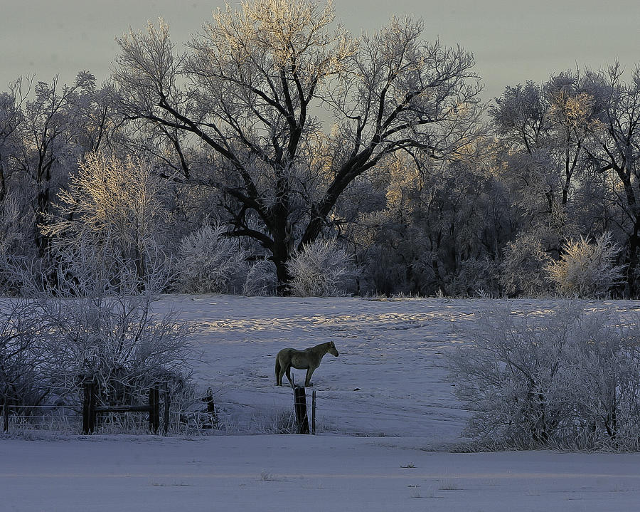 Dawn Photograph - White Horse Winter by Kenneth McElroy