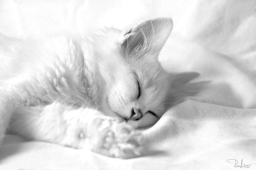 Cat Photograph - White Kitten On White. by Raffaella Lunelli
