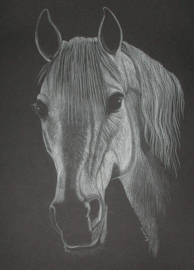 Horse Pastel - White Mare by Stephanie L Carr