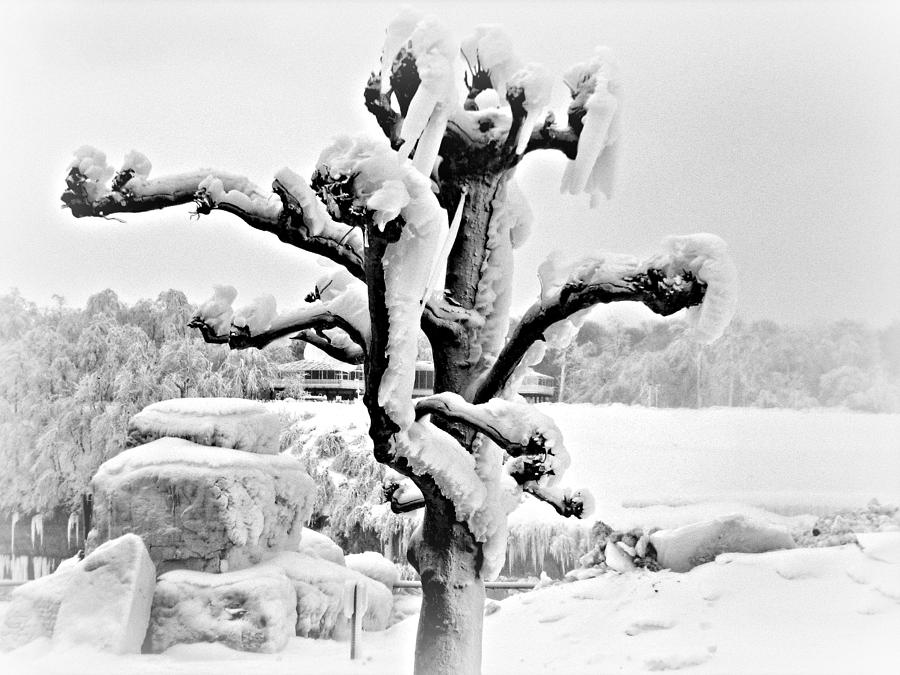 Snow Photograph - White Mink by Cathy Dunlap