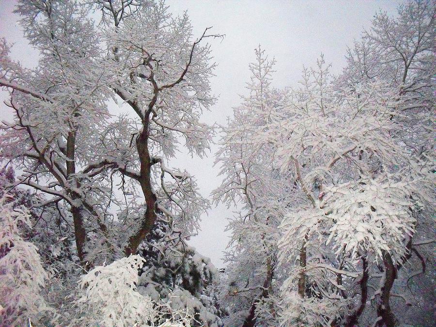 Cheyenne Canyon Photograph - White On White by Clarice  Lakota