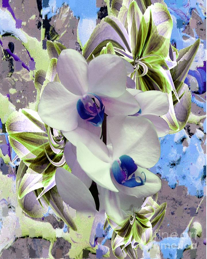 Orchid Photograph - White Orchids And A Touch Of Blue by Doris Wood