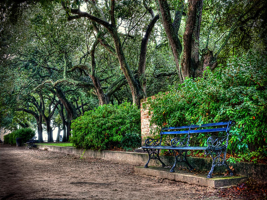 White Point Gardens Bench Photograph by Jenny Ellen Photography
