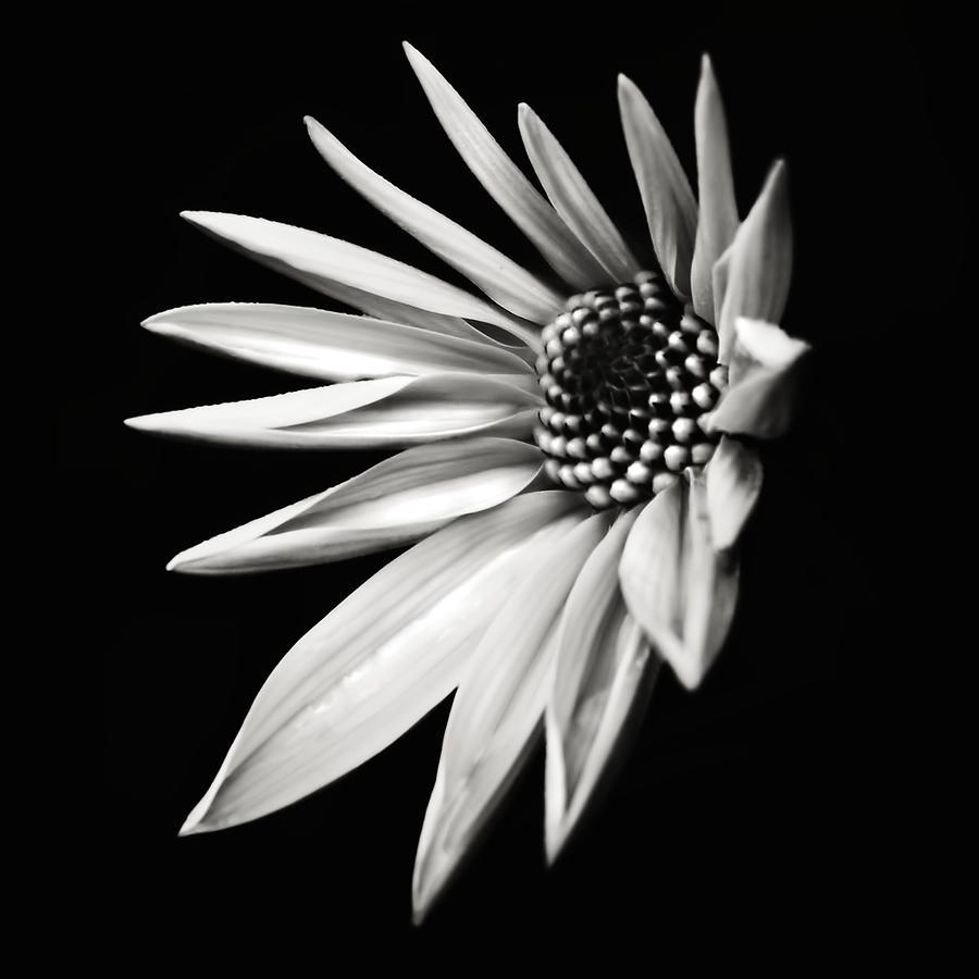 Flora Photograph - White Star by Jaromir Hron