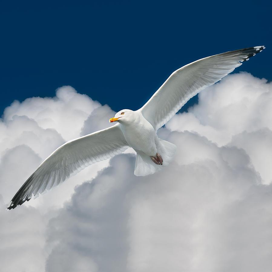 Iandavidsoar Pyrography - White Surfer by Ian David Soar