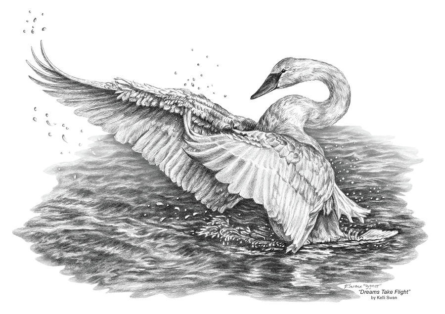 White Swan - Dreams Take Flight Drawing By Kelli Swan