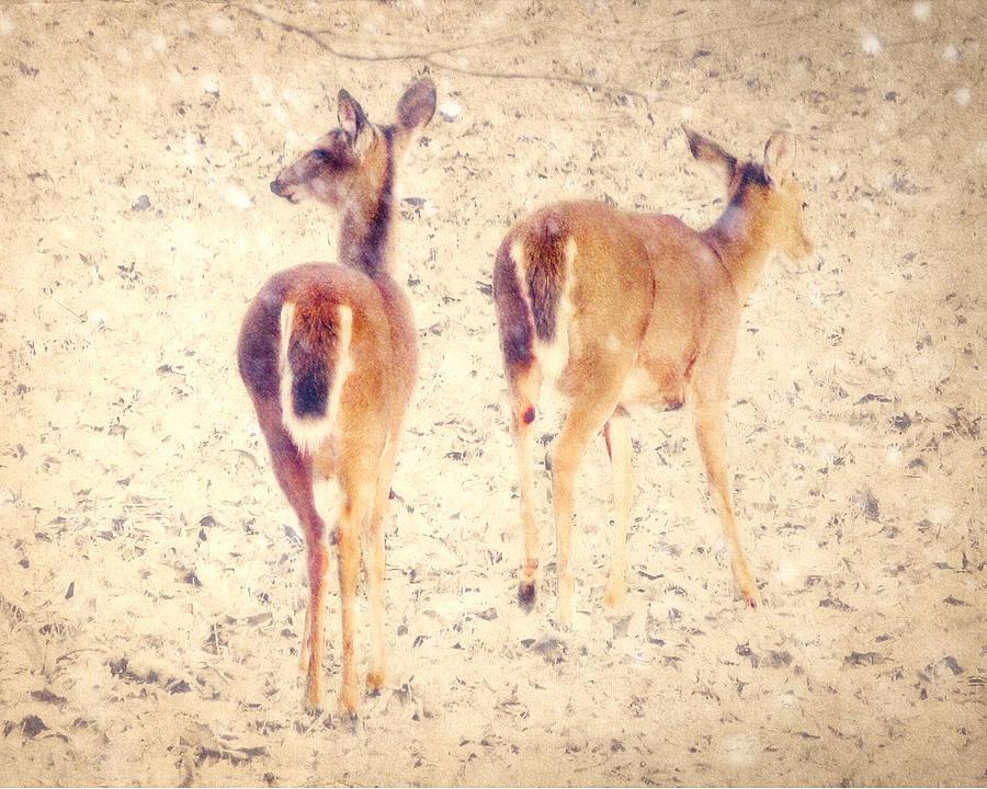 White-tailed Deer Photograph - White Tails In The Snow by Amy Tyler