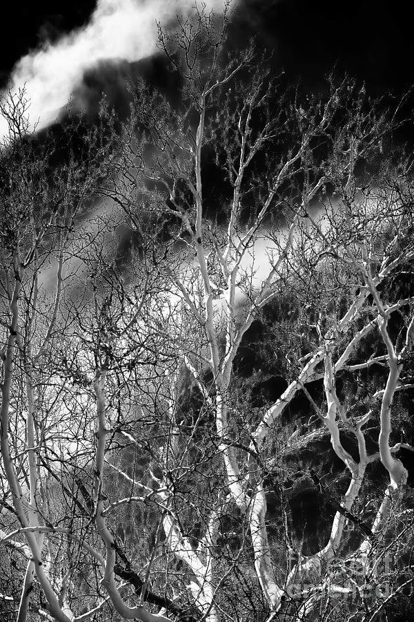 Tree Photograph - White Tree Wave by John Rizzuto