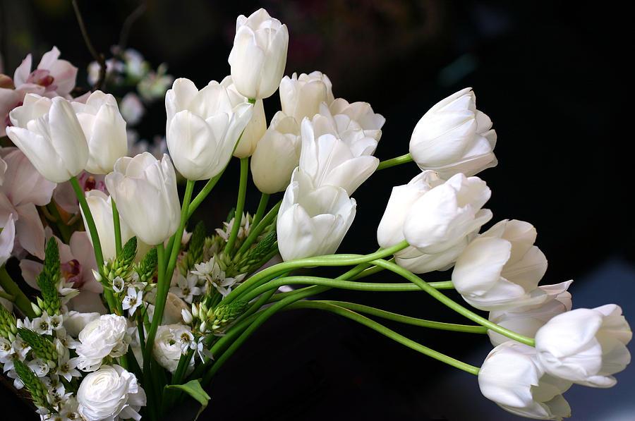 White Tulip Bouquet Photograph by Diane Dua