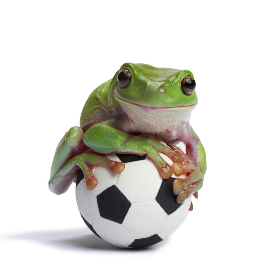 Whites Tree Frog On Small Football Photograph By American