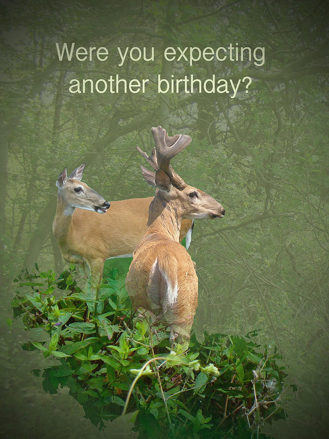 Whitetail deer birthday card photograph by mother nature birthday photograph whitetail deer birthday card by mother nature bookmarktalkfo Image collections