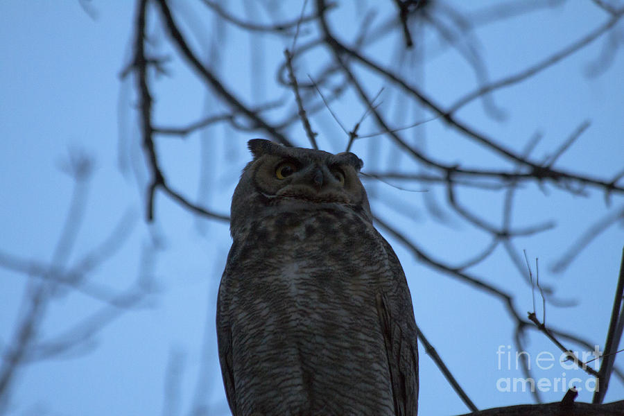 Owl Photograph - Who 2 by Scotts Scapes