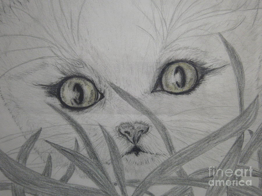 Cat Drawing - Who Are You by Nancy Rucker