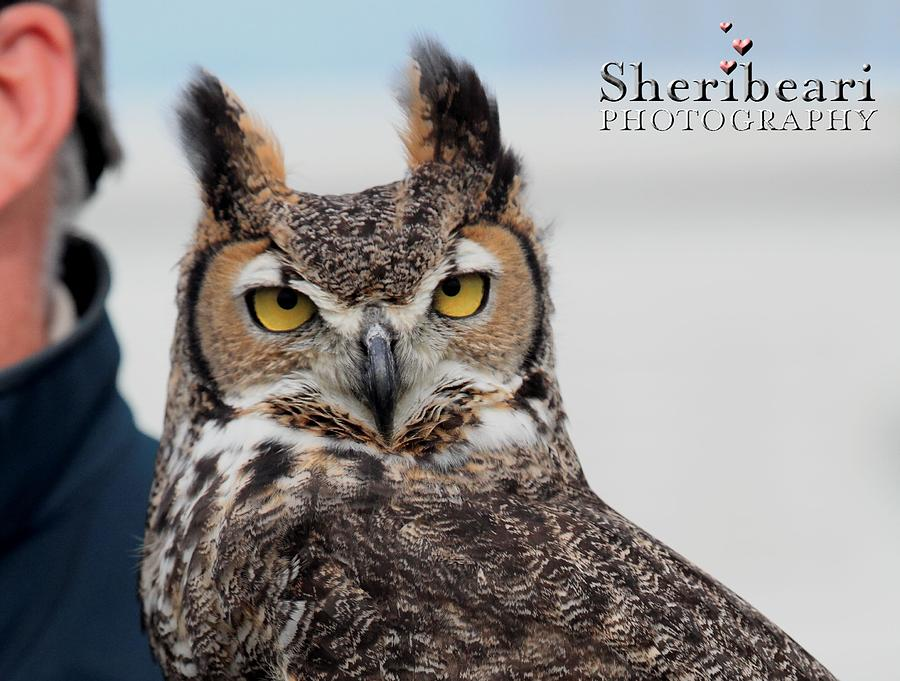 Owl Photograph - Who Are You by Sheri Bartay