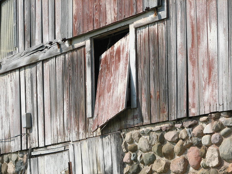 Barn Photograph - Who Let The Cow Out by Michelle Shull