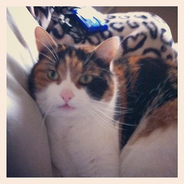 Cat Pet Photograph - Who Me . by Sam Cottenden