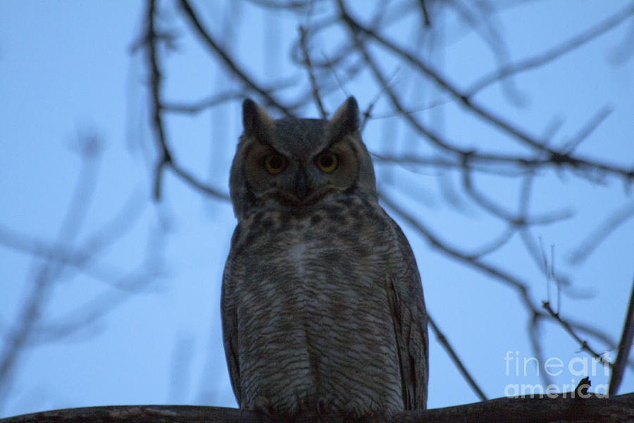 Owl Photograph - Who by Scotts Scapes