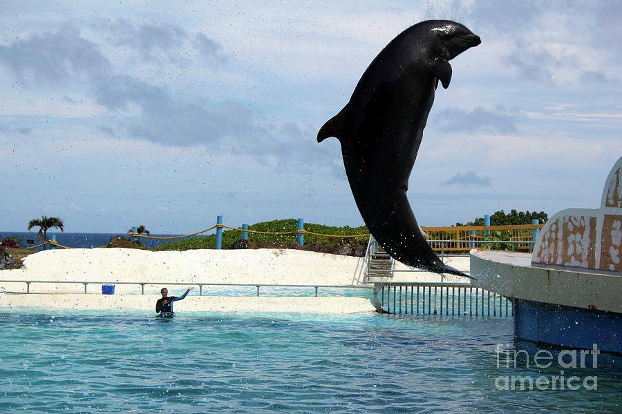 Wholphin Photograph By Nicole Fleckenstein