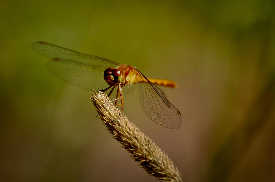 Insect Photograph - Whos looking by Lisa Kane