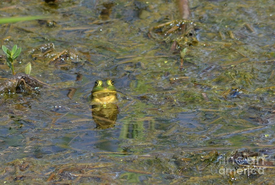 Frog Photograph - Why Is This My Life by Kathy Gibbons