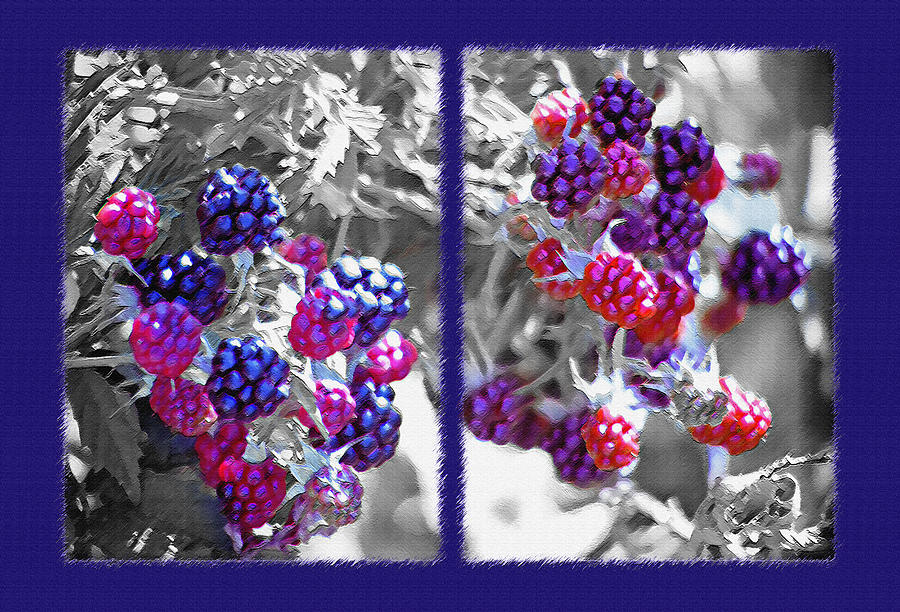 Raspberries Photograph - Wild Berries Diptych by Steve Ohlsen