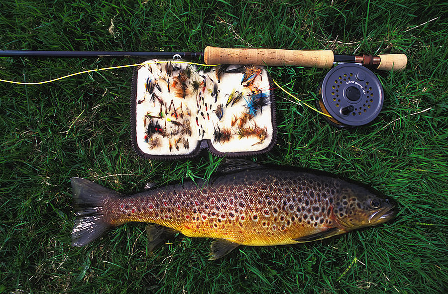 Wild Brown Trout Photograph - Wild Brown Trout And Fishing Rod by Axiom Photographic