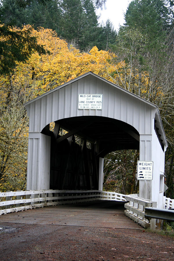 Covered Bridge Photograph - Wild Cat Bridge  by Mary Gaines