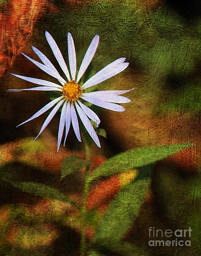Coos Bay Photograph - Wild Flower by Billie-Jo Miller