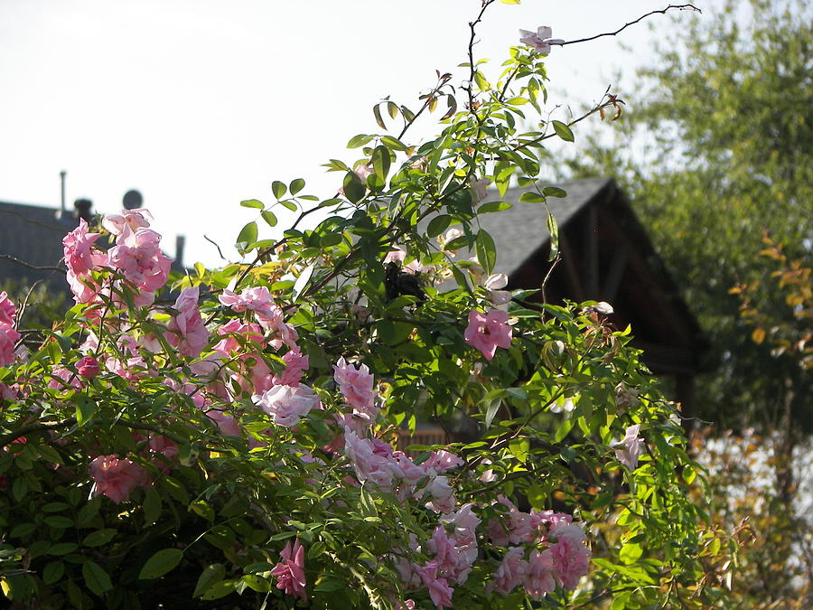 Wild Flowers #1 Photograph by Anna Stearman