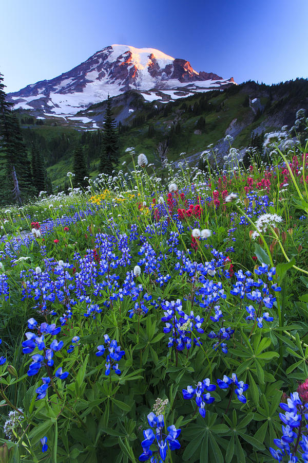 Vertical Photograph - Wild Flowers In The Rainier National Park by Gavriel Jecan